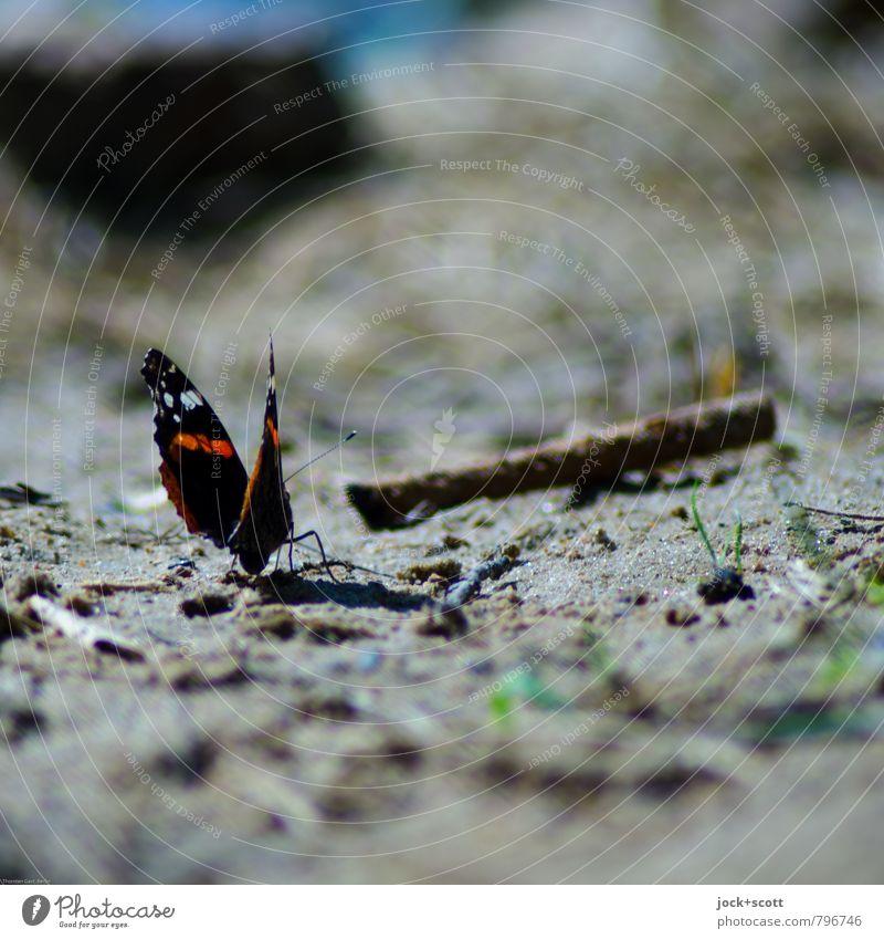 Falter & Sand Sommer Gras Stock Seeufer Schmetterling 1 frei klein natürlich niedlich unten Wärme Leben Erschöpfung Umwelt gegenüber abstrakt Silhouette