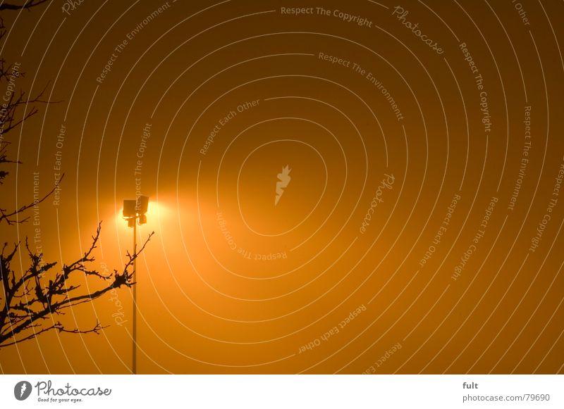 licht an Natur Baum Lampe Holz hell Beleuchtung Nebel Industrie Verkehrswege Baumstamm Glühbirne Scheinwerfer Schleier Flutlicht Lichtschein Lichtstrahl
