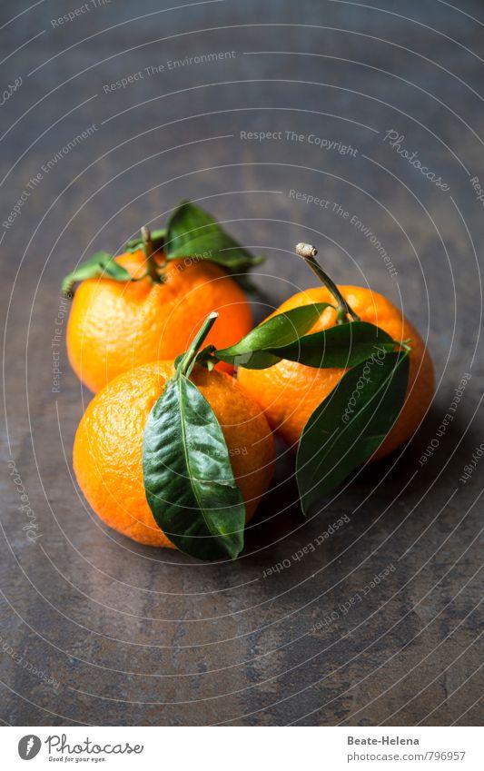 wo die Orangen blühen, wachsen, schmecken Natur Pflanze grün schön Farbe Gesunde Ernährung Blatt Essen Gesundheit Lebensmittel orange Frucht Wachstum frisch