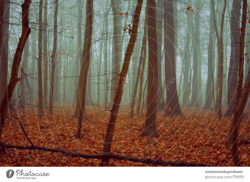 loneliness dunkel Nebel Wald Einsamkeit gruselig leer Baum Winter kalt grau Blatt rot Dezember Menschenleer abgelegen fremd außergewöhnlich Holzmehl trist
