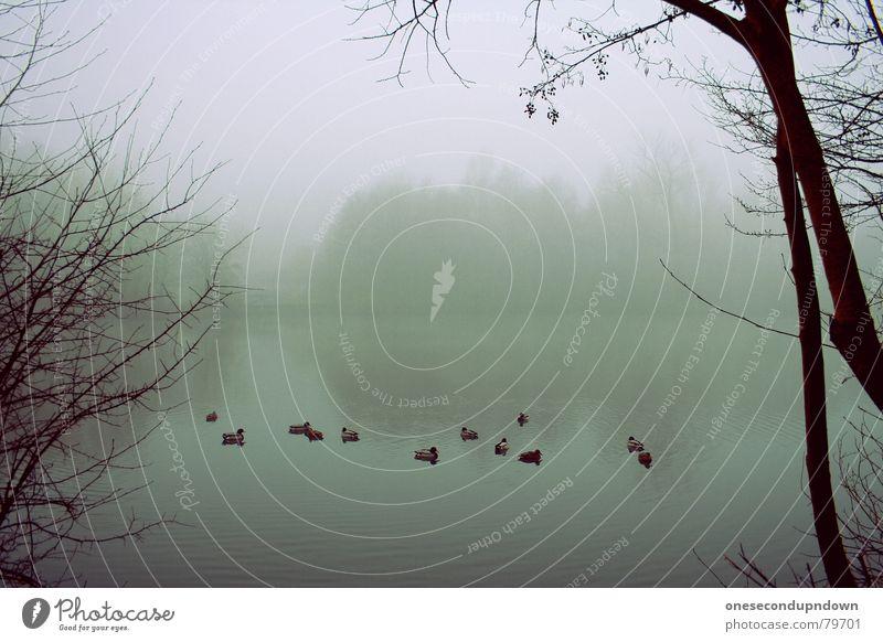 Sleepy Hollow See dunkel Nebel gruselig leer Baum Winter kalt grau Dezember Menschenleer abgelegen fremd außergewöhnlich trist herzlos Schleier geisterhaft Eis