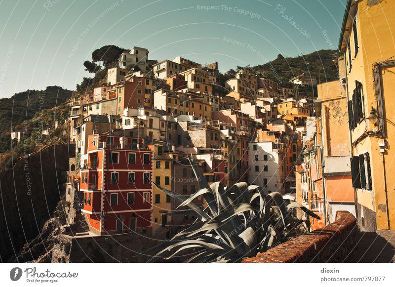 Riomaggiore Ferien & Urlaub & Reisen Pflanze Sommer Haus Wärme Gebäude Häusliches Leben authentisch Tourismus Schönes Wetter Italien Dorf Bauwerk