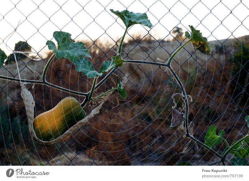 Abhängen. Natur Pflanze grün Sommer Erholung Landschaft gelb Herbst Garten Feld Wachstum trocken nachhaltig reif Gartenarbeit