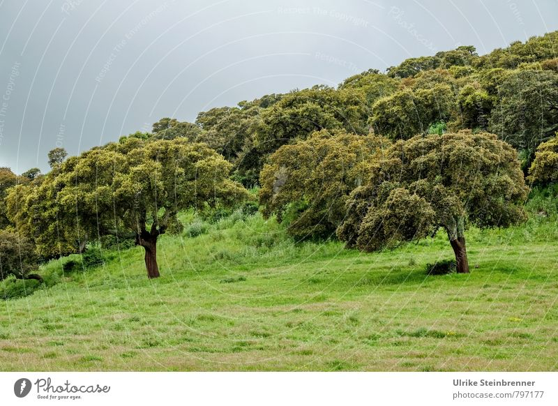 Korkeichenwald Natur Ferien & Urlaub & Reisen alt Pflanze grün Baum Landschaft Wolken Wald Umwelt Gras Frühling natürlich Feld Wachstum Tourismus