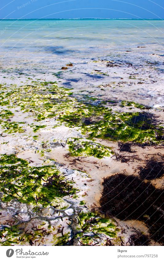 Himmel Natur blau Sommer Wasser Meer Erholung Wolken Küste Holz Freiheit Stein Sand Linie hell Felsen