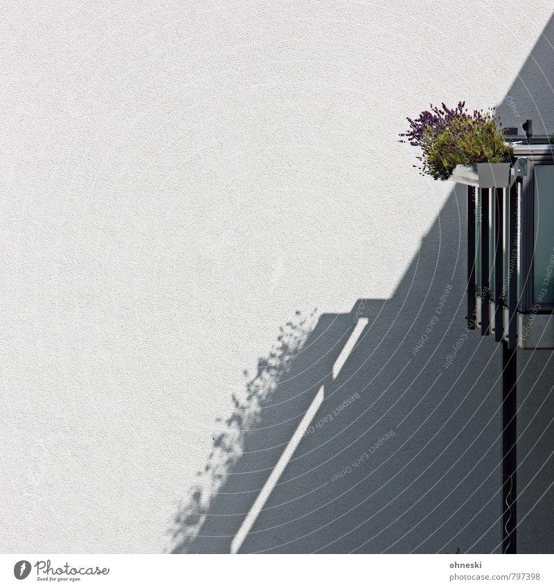 Balkonien Pflanze Blume Haus Wand Mauer Fassade Häusliches Leben Balkonpflanze