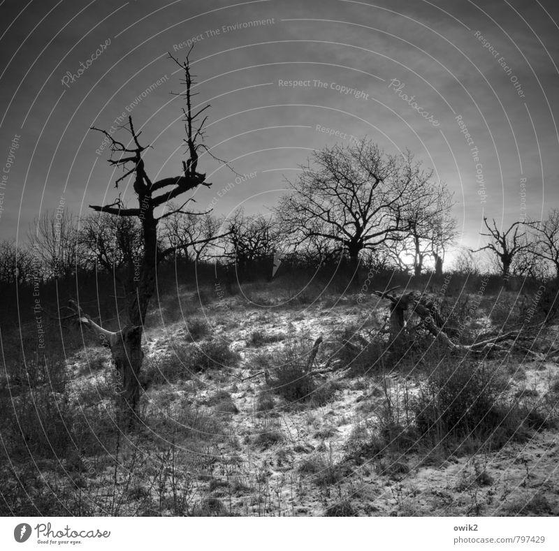 Die Tage werden kürzer Umwelt Natur Landschaft Himmel Winter Eis Frost Schnee Pflanze Baum Sträucher karg kahl Holz Ast Zweig leuchten bedrohlich dunkel kalt