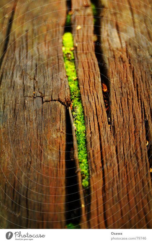 Nischendasein Leben Riss Holz Fuge Pflanze grün Botanik Lebensfreude Maserung Symbiose rustikal alt Fröhlichkeit Lebenskraft Strukturen & Formen Biotop