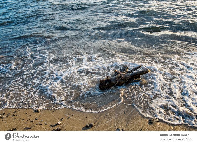 Feuchtigkeit | Strandgut Natur Ferien & Urlaub & Reisen Sommer Meer Landschaft Strand Bewegung Gefühle Küste natürlich Holz Schwimmen & Baden Sand liegen Kraft Wellen