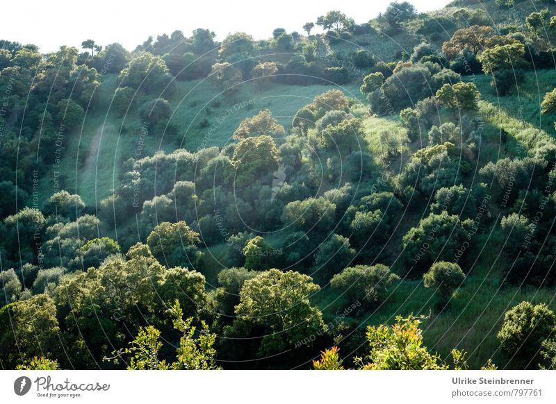 Bosco sardo Ferien & Urlaub & Reisen Tourismus Umwelt Natur Landschaft Pflanze Himmel Frühling Schönes Wetter Baum Gras Sträucher Insel Sardinien leuchten