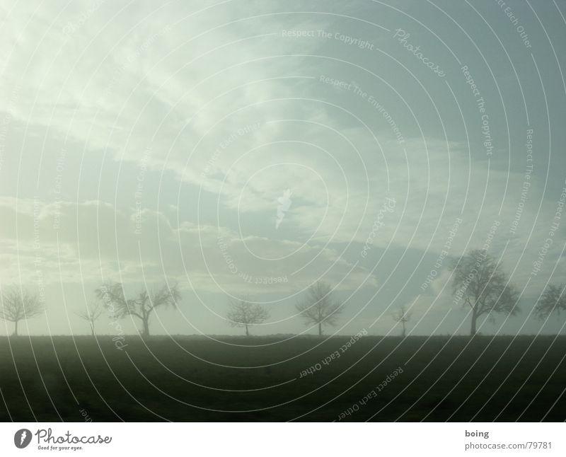 Nebel des Grauens - Weihnachten in Heathrow Baum Ferne Herbst Feld Nebel Allee Apfelbaum Obstbaum Geisel Baumschule Streuobstwiese Steinfrüchte Kernobst