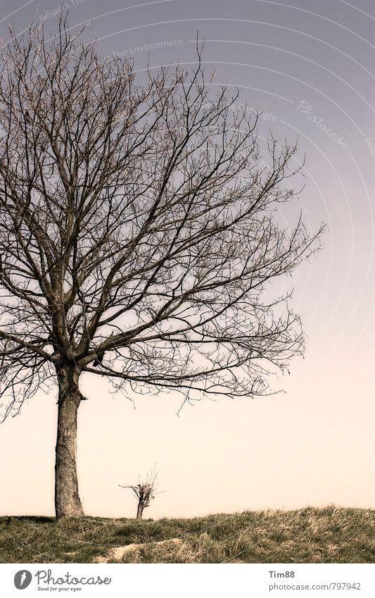 Baum Natur ruhig Wiese Herbst Wetter Klima