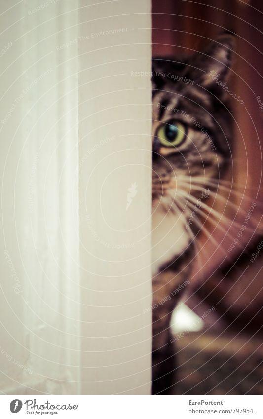 komm, trau dich Tür Tier Haustier Katze Fell 1 Linie entdecken natürlich Neugier niedlich schön braun weiß Türrahmen Auge Kopf Ohr Schnurrhaar Blick intensiv