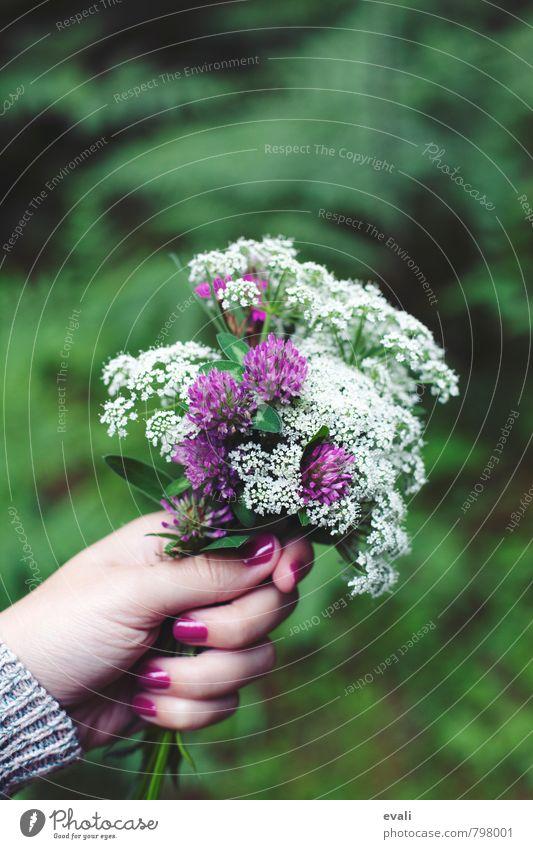 Bitte danke Pflanze Frühling Sommer Blume Blüte Kleeblüte Blühend Fröhlichkeit frisch grün violett rosa weiß Blumenstrauß gepflückt Hand Blumen schenken