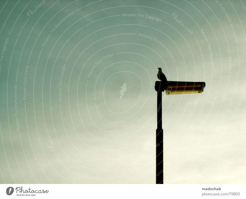BESINNLICHKEIT Himmel blau ruhig Tier Einsamkeit grau Lampe Vogel sitzen Luftverkehr trist Laterne Straßenbeleuchtung dezent Eindruck