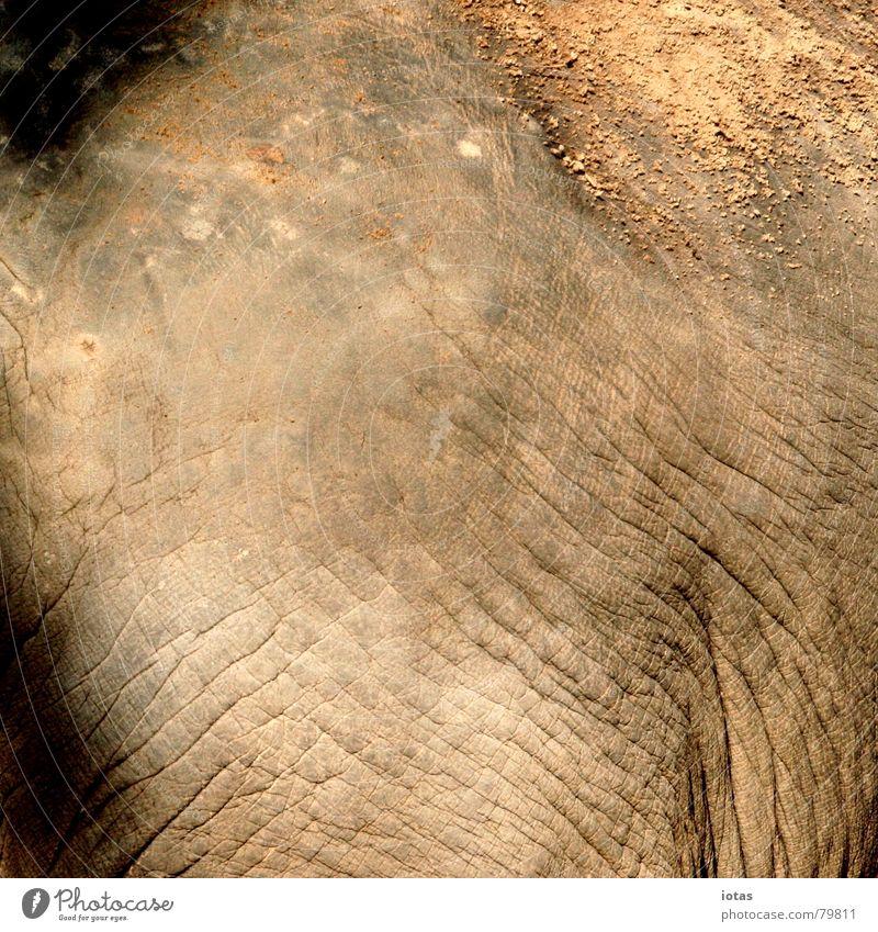 teint rot schwarz Sand Wärme Haut mehrere Physik heiß Falte viele Zoo Konzentration dick Indien Sonnenbad Säugetier