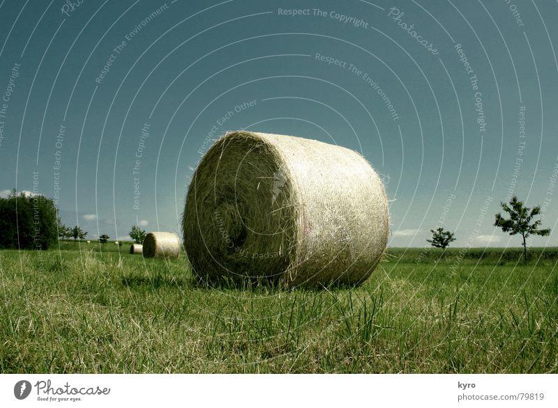 Geballtes Stroh Waldwiese Feld Sommer Wiese Landwirtschaft Baum Am Rand Horizont Arbeit & Erwerbstätigkeit Wolken grün Gras Himmel Halm Ernte blau Schatten