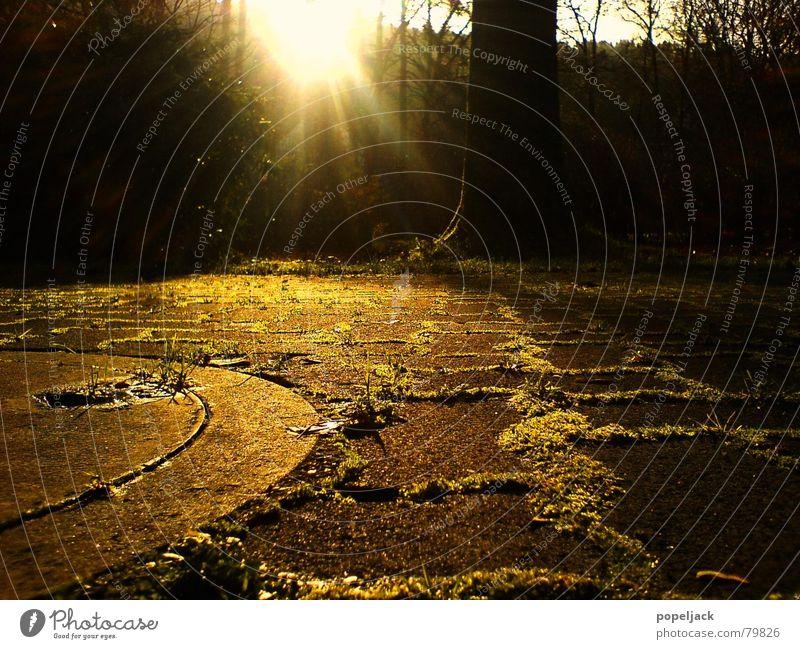 deutsches Winterwonderland Gully Baum Licht Herbst grau gelb Gras Furche Wiese Verkehrswege Makroaufnahme Nahaufnahme Garten Park Sonne Kopfsteinpflaster