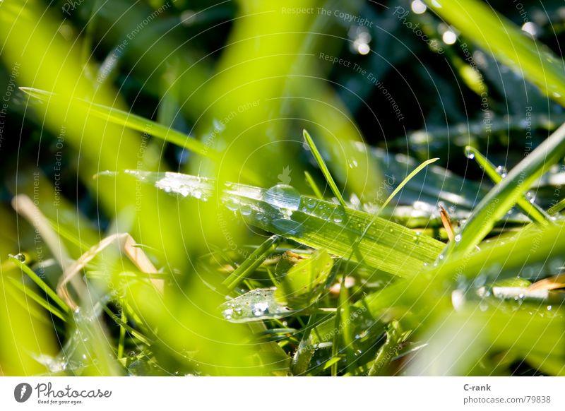 Wintertau Halm Gras grün satt frisch Wiese Tau Außenaufnahme kalt flüchtig kurzlebig Wasser Klarheit Wassertropfen kämpfen
