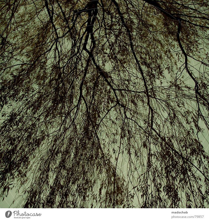 ZEIT Baum Natur Sträucher Muster Hintergrundbild durcheinander Wachstum Himmel türkis grün tree brenches Ast Zweig Strukturen & Formen patteern tile Linie