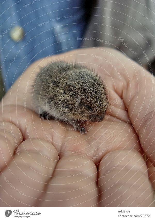 Lemming gefangen ...oder ist es doch ne Maus? Mensch Hand blau Tier Gesicht grau Angst klein Nase Finger Detailaufnahme süß Schutz Vertrauen Fell
