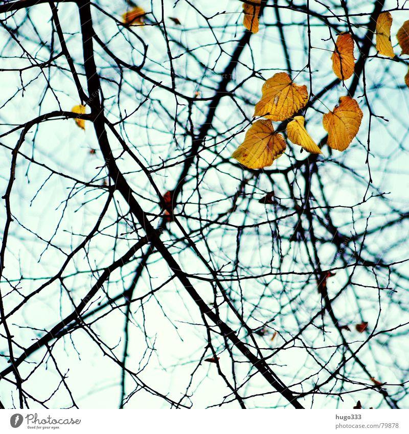 Fallende Blätter... 2 Holz Herbst Blatt hängen leer grün gelb Baum Licht Biologie Photosynthese Abschied Herbstlaub durcheinander Natur Holzmehl azurblau Trauer