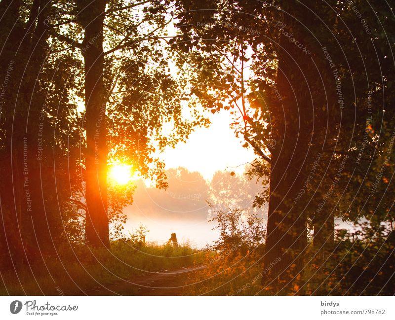 Am Morgen danach Natur Sonne Sonnenaufgang Sonnenuntergang Sonnenlicht Frühling Sommer Herbst Nebel Wald leuchten ästhetisch Freundlichkeit positiv Wärme orange