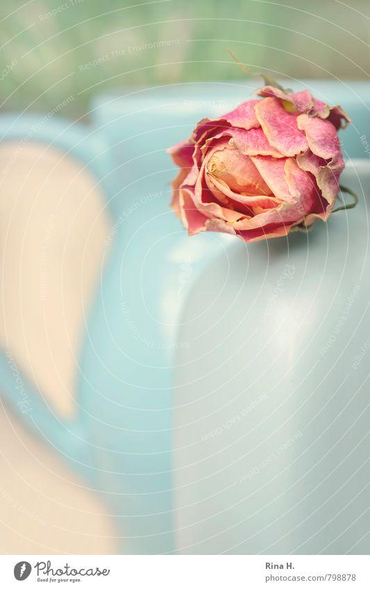 VasenStill blau grün rosa Vergänglichkeit Rose Stillleben verblüht Kannen dehydrieren