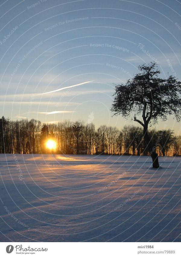 Wintersonne Sonnenuntergang Baum Abend Himmelskörper & Weltall Schnee Landschaft blau blue sun heaven Abenddämmerung
