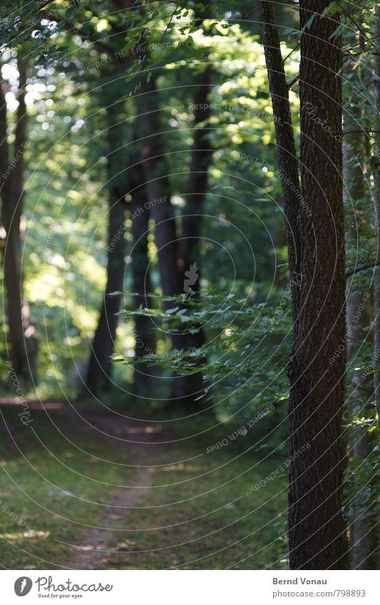 Umfahrung ruhig Sonne Natur Baum Gras Blatt Wege & Pfade natürlich friedlich Kurve Baumstamm Ast Fußweg Farbfoto Außenaufnahme Menschenleer Morgen Licht