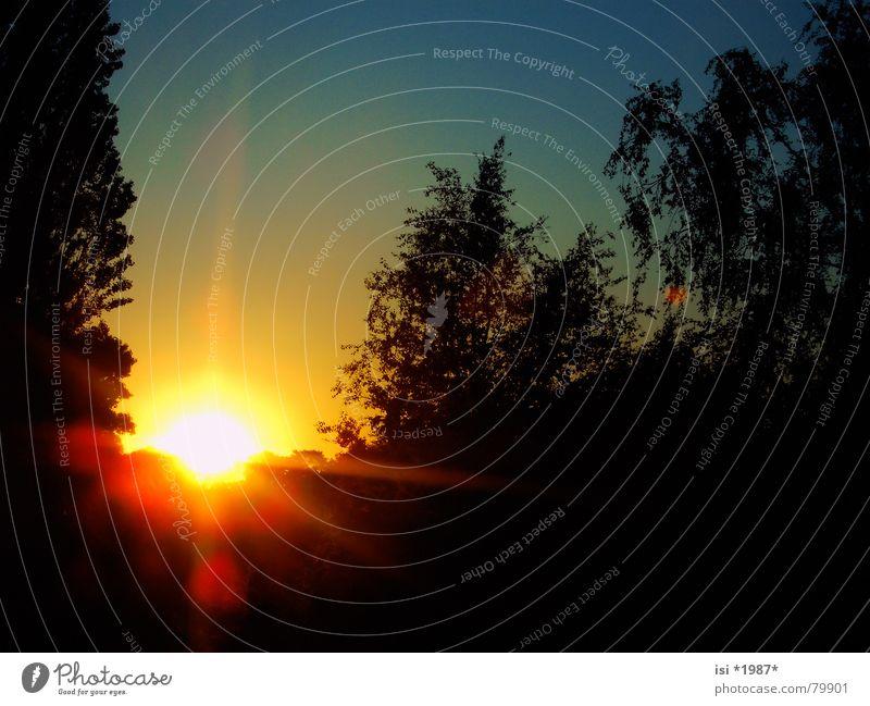 SunBeams Himmel Baum Sonne blau gelb Ferne Herbst Beleuchtung Kraft orange Stern glänzend Kraft Romantik Abenddämmerung Paradies