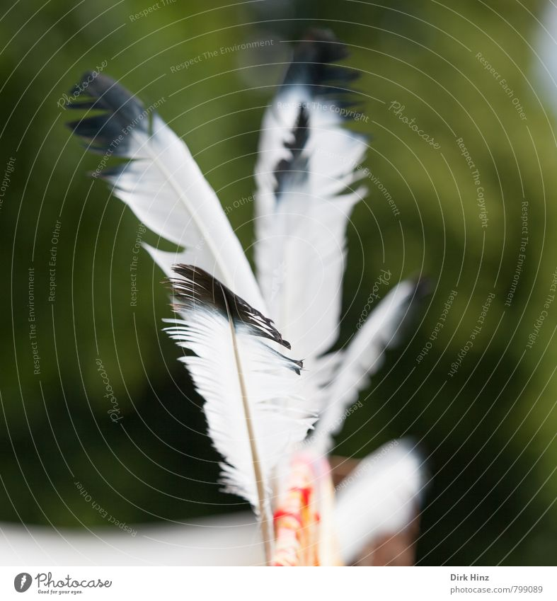 Federleicht Freizeit & Hobby Spielen Kinderspiel Freiheit Karneval Natur fliegen grün schwarz weiß beweglich Abenteuer Kreativität Leichtigkeit träumen Indianer
