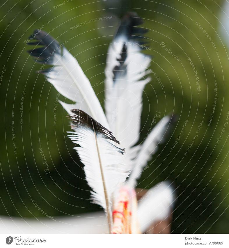 Federleicht Natur grün schön weiß schwarz Bewegung Spielen Freiheit fliegen träumen Freizeit & Hobby frei Feder Kreativität Abenteuer Schutz