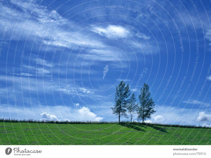 drei Himmel Baum grün blau Ferien & Urlaub & Reisen Wolken Wiese Gras Freiheit Luft Ausflug Rasen Sportrasen Landwirtschaft Weide Baumstamm