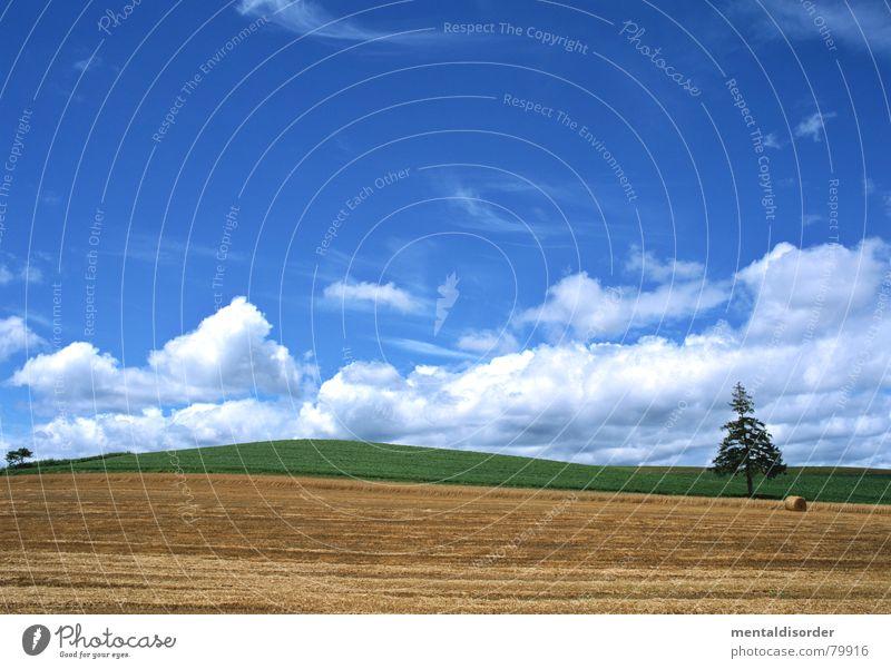 one Himmel Baum grün blau Ferien & Urlaub & Reisen Wolken Wiese Gras Freiheit Luft Ausflug Rasen Sportrasen Landwirtschaft Weide Baumstamm