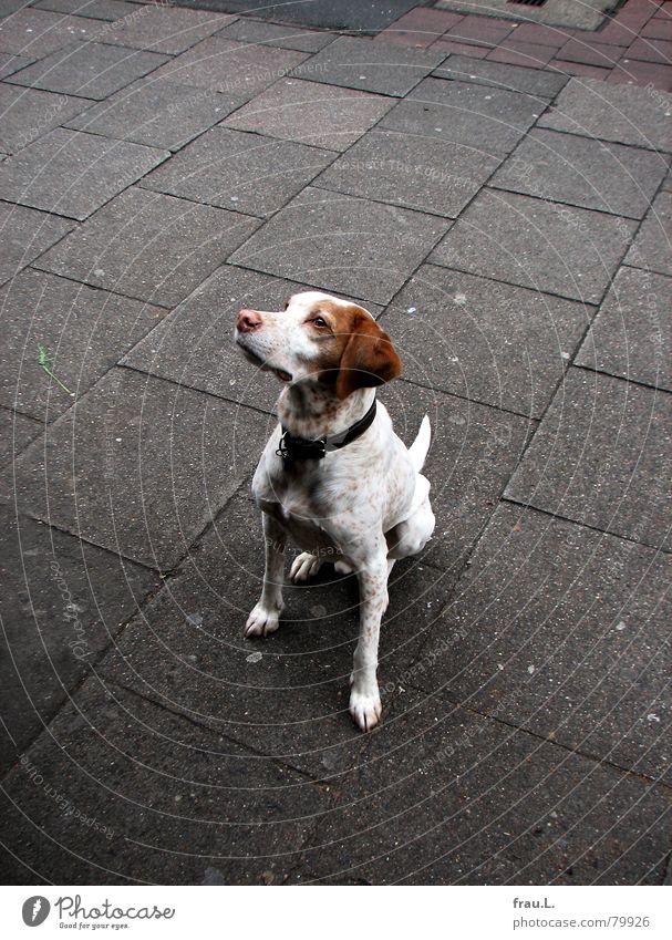 wer gibt mir etwas ab? Treue Hund betteln Hundeblick Straßencafé Säugetier Gastronomie Bürgersteig Blick Appetit & Hunger Mitgefühl mitleid erregen geweg
