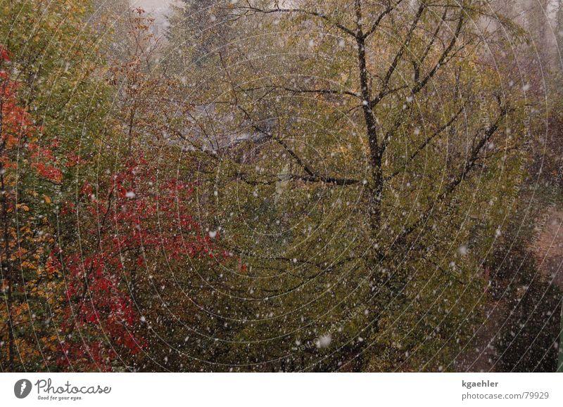 Der Winter kommt Wasser Baum Blatt Herbst Regen nass feucht Hagel Sturzbach Wasserschwall