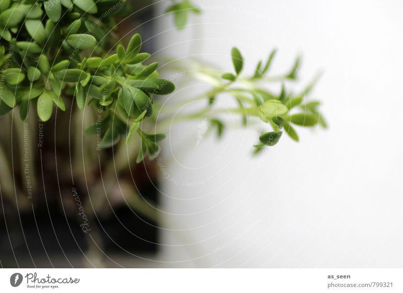 Aus der Reihe tanzen Natur Pflanze grün Farbe weiß Blatt Leben klein Essen Gesundheit braun Lebensmittel Wachstum authentisch Beginn Ernährung