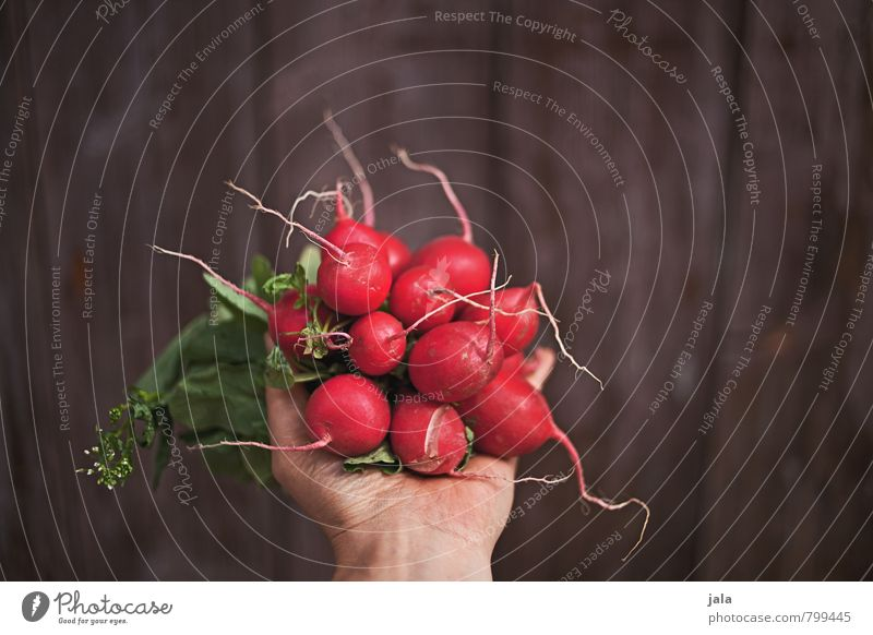 radieschen Hand Gesunde Ernährung feminin natürlich Gesundheit Lebensmittel frisch Ernährung Scharfer Geschmack Gemüse zeigen lecker Bioprodukte Vegetarische Ernährung Holzwand Wurzelgemüse