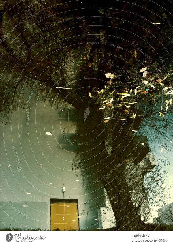 TAGTRAUM Pfütze wirklich Nebel nass Herbst Haus Hochhaus Gebäude Material Fenster live Block Beton Etage trist dunkel Leidenschaft Spiegel Vermieter Mieter