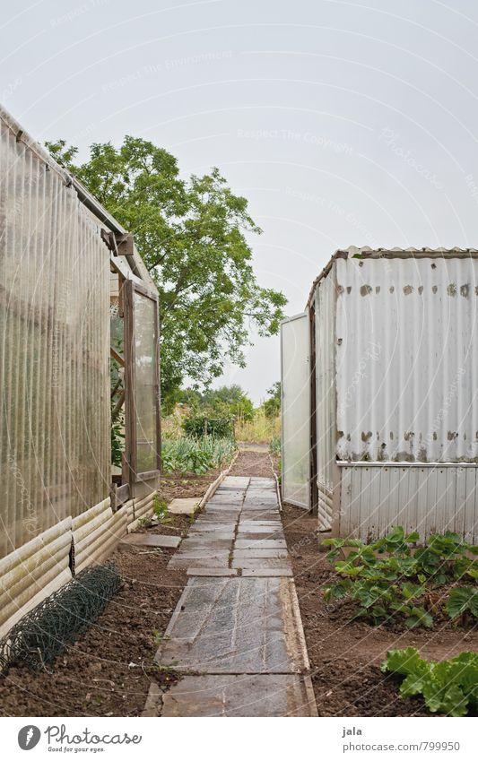 gewächshäuser Himmel Natur Pflanze Baum Wege & Pfade Gebäude natürlich Garten trist Bauwerk Hütte Gewächshaus