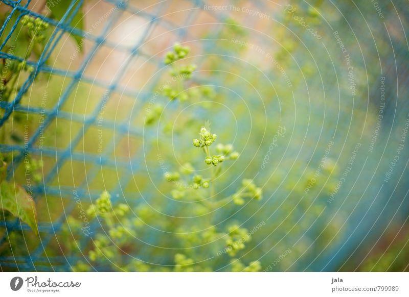. Umwelt Natur Pflanze Sommer Blume Sträucher Blatt Grünpflanze Wildpflanze Garten ästhetisch natürlich Farbfoto Außenaufnahme Menschenleer Tag