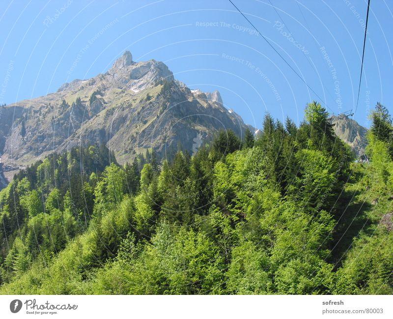 pilatus Himmel Sommer Wald Berge u. Gebirge Schönes Wetter Kabel fahren Blauer Himmel Mischwald Pilatus