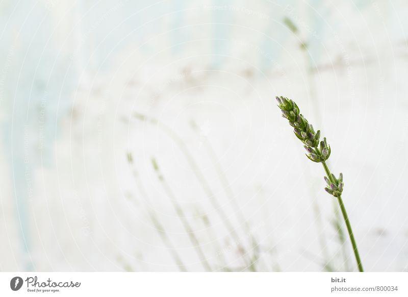 heute geschlossen Gesundheit Alternativmedizin Wellness harmonisch Erholung ruhig Meditation Sommer Feste & Feiern Natur Pflanze Frühling Blume Wiese Mauer Wand