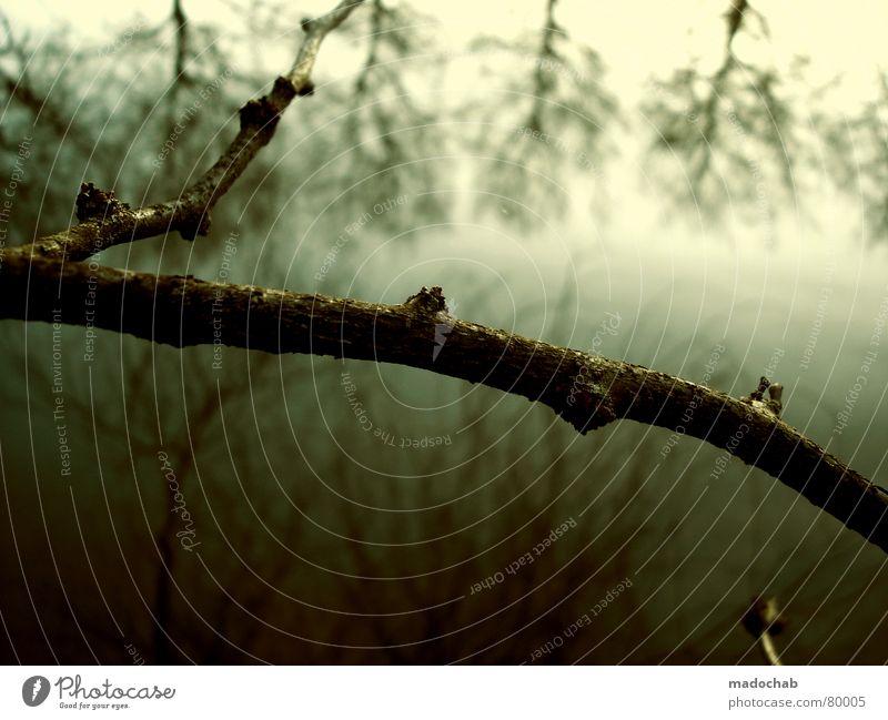555 - SCHNAPS FÜR ALLE Romantik Wald Baum Winter Herbst kalt grau Kitsch grün Wäldchen Baumstamm Nebel dunkel Wildnis hart Gefühle Schwärmerei Licht Umwelt