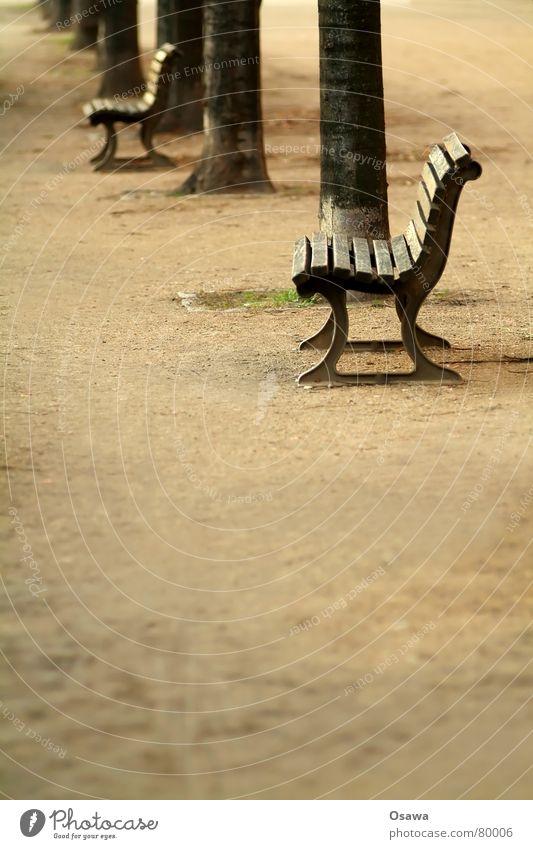 Bank Baum ruhig Einsamkeit Straße Erholung Herbst Traurigkeit Wege & Pfade Sand schlafen sitzen trist mehrere Pause Asphalt