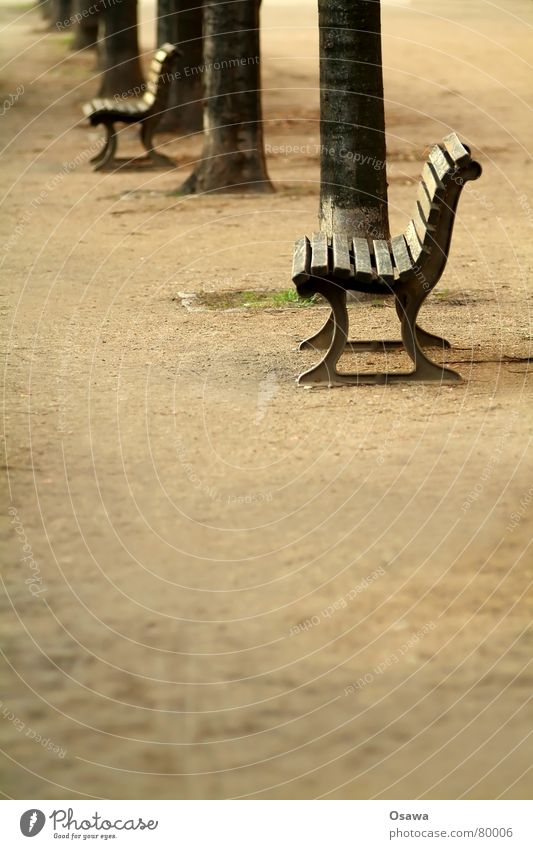 Bank mehrere Baum Baumstamm Möbel Rangordnung Hauptstraße Erholung ruhen Liege Straßenbelag Sofa Hierarchie Streusand Split Kanapee Kies Asphalt ruhig