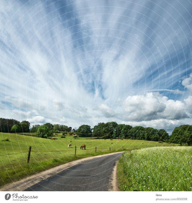 Hinterland Himmel Natur Ferien & Urlaub & Reisen grün Sommer Baum Erholung Landschaft Wolken Tier Straße Wiese Wege & Pfade Feld Idylle Schönes Wetter