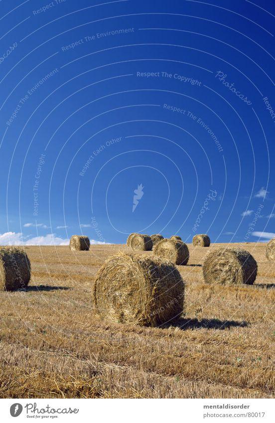 erntezeit Himmel blau Ferien & Urlaub & Reisen grün Baum Wolken Ernährung Wiese Lebensmittel Gras Freiheit Luft Feld groß Ausflug Kreis