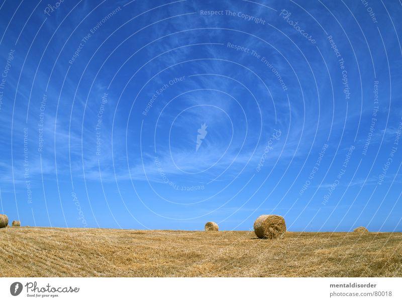 (land)wirtschaft Himmel blau Ferien & Urlaub & Reisen grün Baum Wolken Ernährung Wiese Lebensmittel Gras Freiheit Luft Feld groß Ausflug Kreis